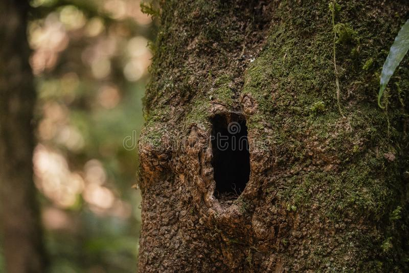 与小洞穴的一棵树 图库摄影