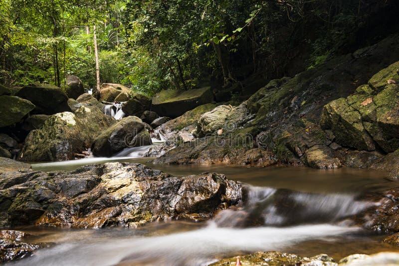 与小瀑布的河背景在热带森林里 库存照片