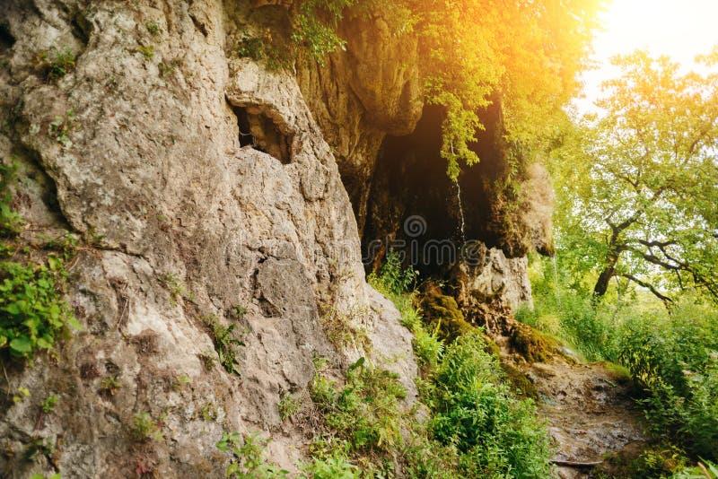 与小瀑布的美好的风景在密集的森林里 库存图片