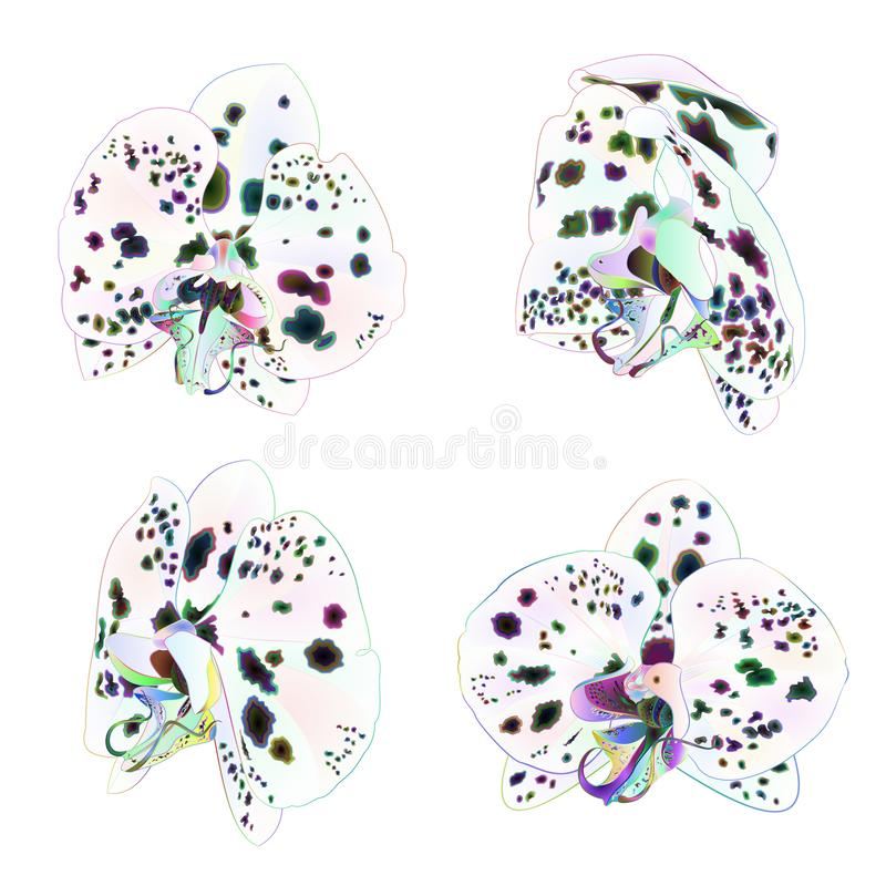 与小点多色的特写镜头美丽的花被隔绝的集合的兰花兰花植物首先在白色背景葡萄酒传染媒介i 皇族释放例证