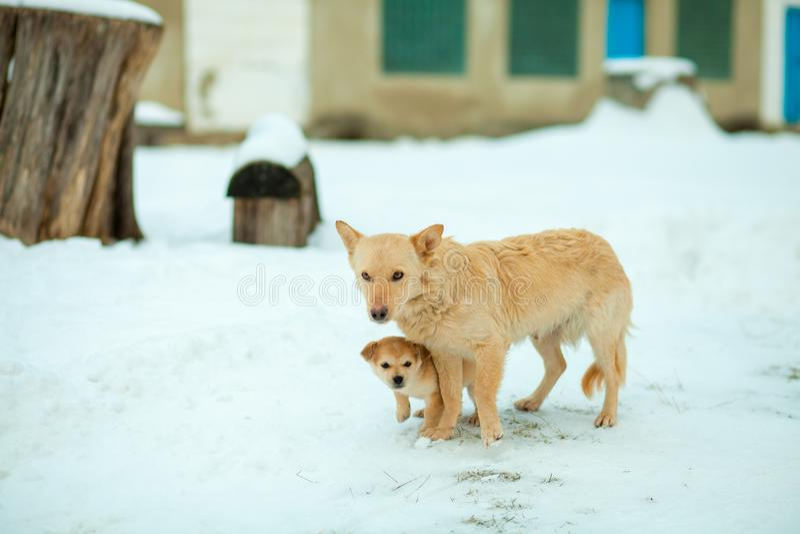与小狗的狗在街道上停留日间变冷静 褐色,动物,画象 库存图片
