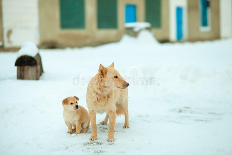 与小狗的狗在街道上停留日间变冷静 褐色,动物,画象 图库摄影