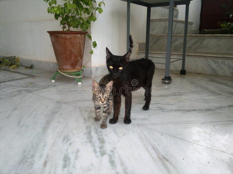 与小猫的母亲猫 库存图片