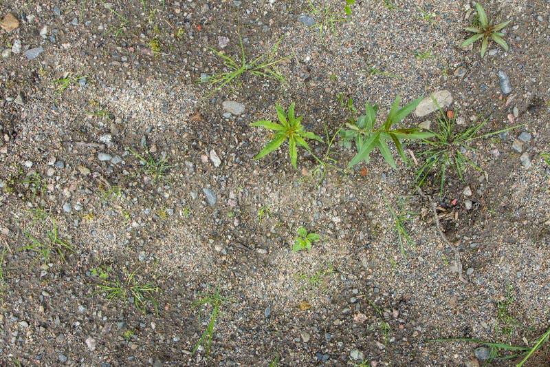 与小石头和植物的地面 库存图片
