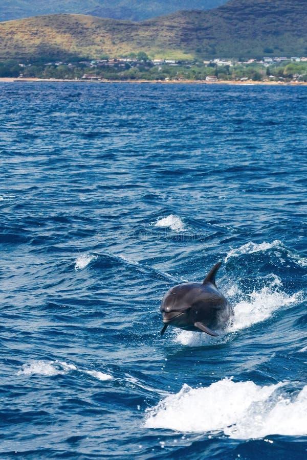 与小船的海豚游泳 免版税库存图片