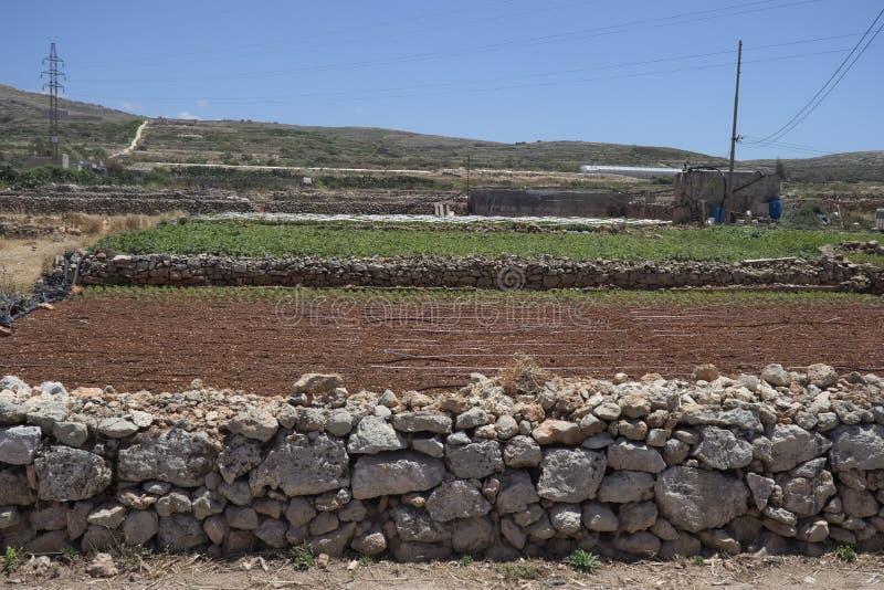 与小规模农业的典型的农业风景在石灰石石块墙之间在马耳他 免版税库存照片