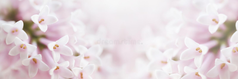 与小pi的美好的嫩柔和的精美花背景 免版税图库摄影