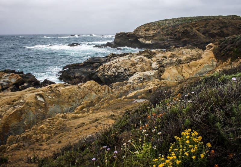 与层状岩层和春天花的加利福尼亚海景 免版税库存图片