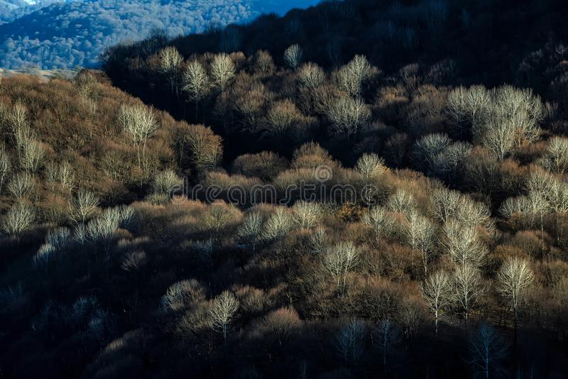 与山森林的风景风景 免版税库存照片