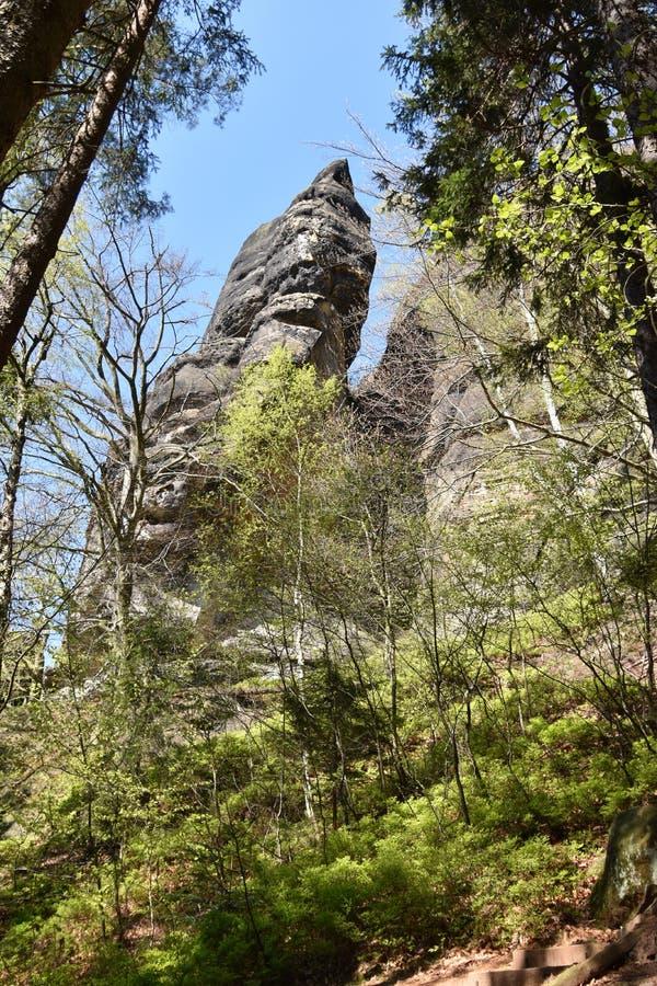 与山的大灰色岩石和树在易北河砂岩山脉的背景中在漂泊Swi附近的美丽的萨克森瑞士 免版税库存照片