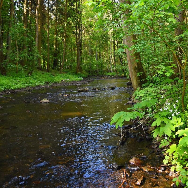 与岩石河的美好的自然和森林室外五颜六色的背景用水 免版税库存图片