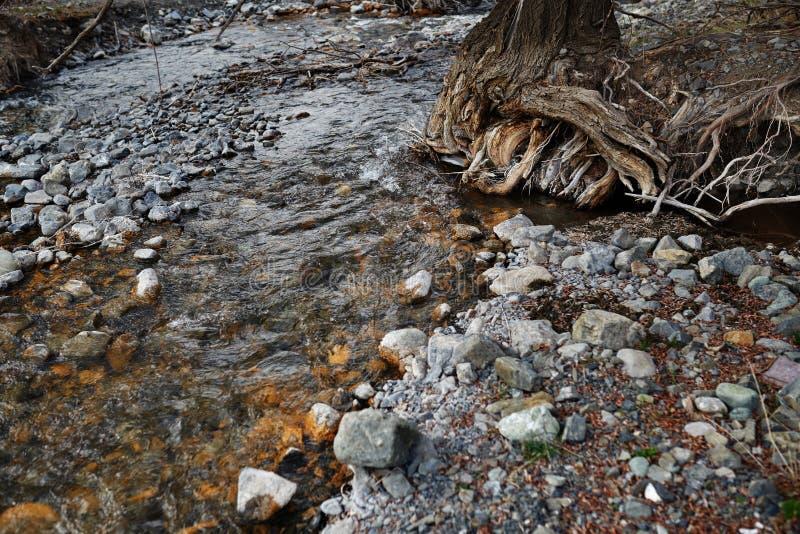 与岩石石头和老树的河床 免版税图库摄影