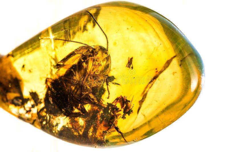 与嵌入昆虫的琥珀 库存图片
