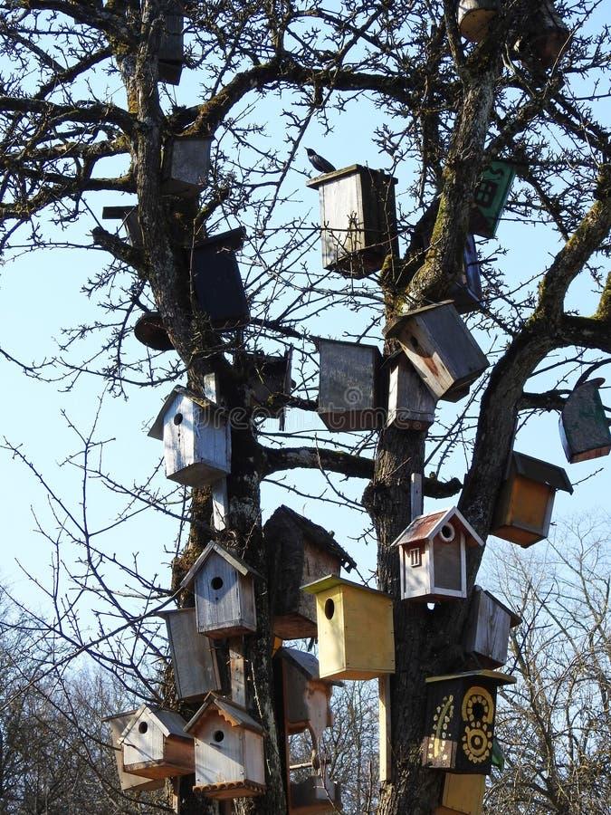 与嵌套箱的树在庭院,立陶宛里 库存照片