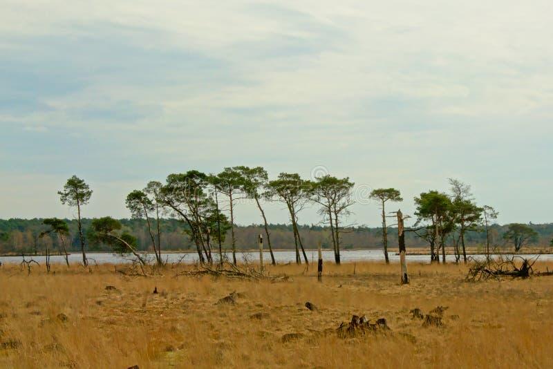 与市分和云杉的树的荒地风景 库存图片