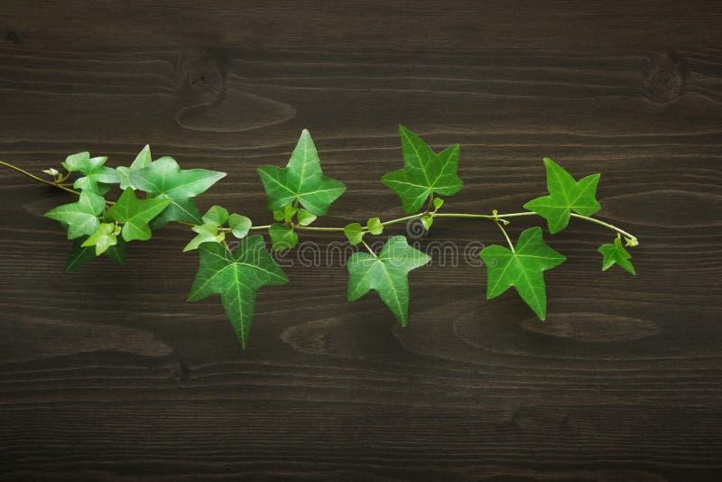 与常春藤的木背景 图库摄影