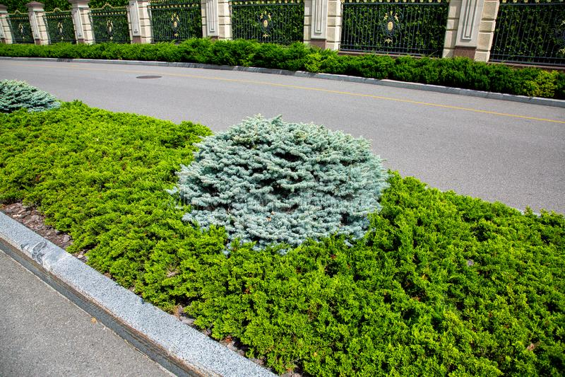 与常青杉木和金钟柏植物的一张床 免版税图库摄影