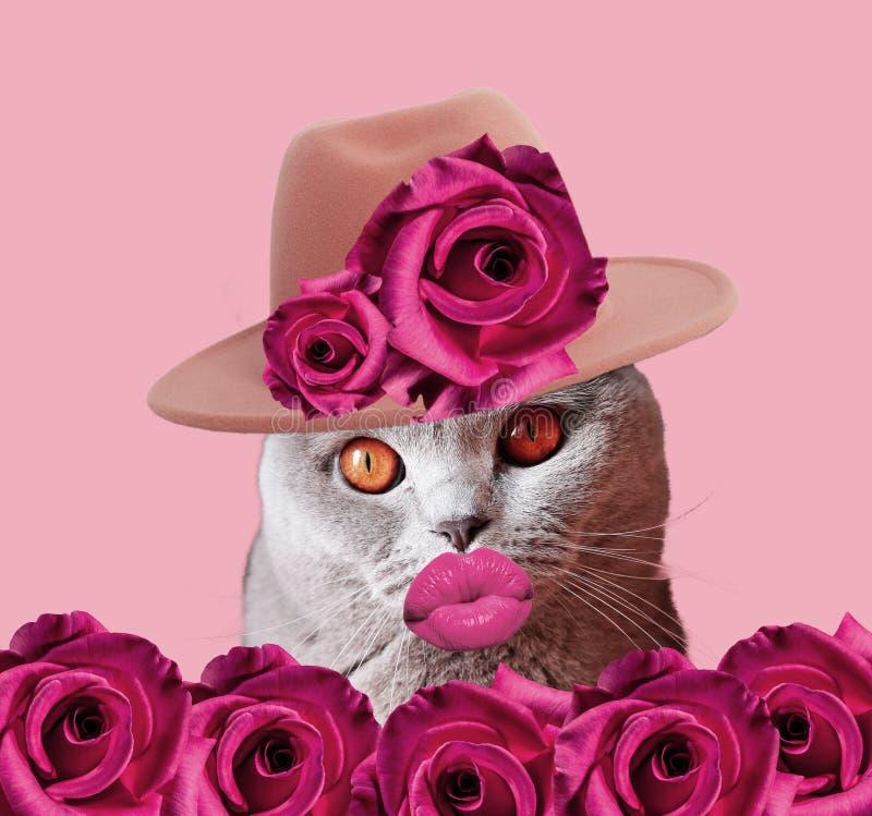 与帽子和桃红色嘴唇的猫 图库摄影