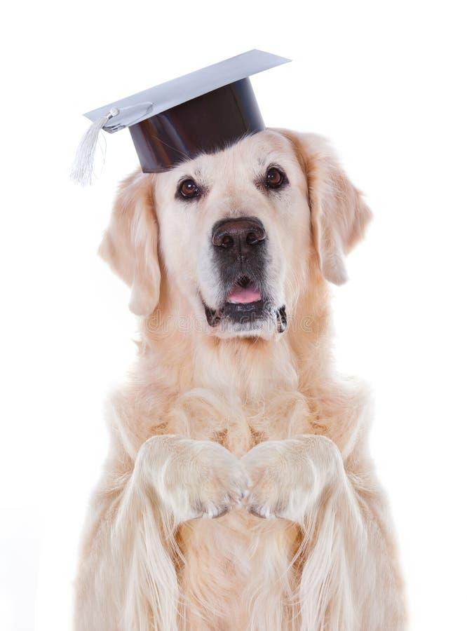 与帽子的狗 免版税库存图片