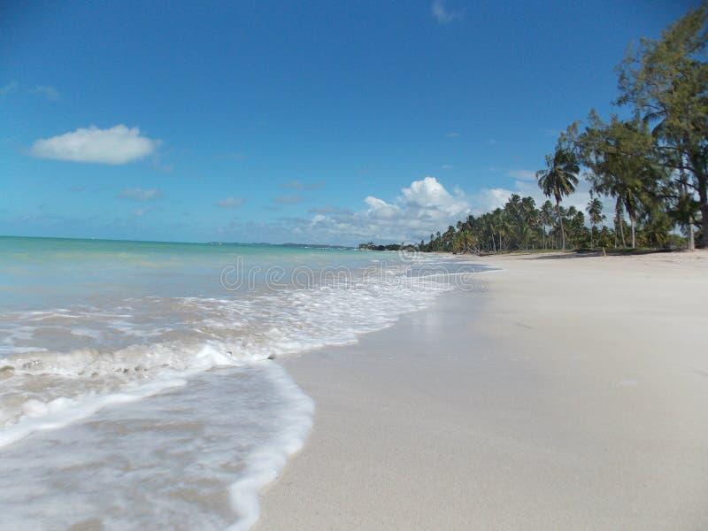 与干净的天空和有些树的美丽的海滩 免版税图库摄影