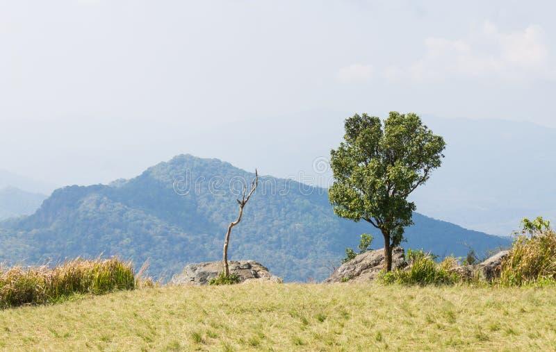 与干树草地山天空和云彩的绿色树在Phu池氏Fa森林公园 库存图片