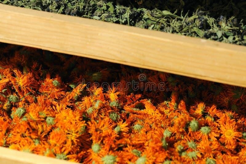 与干植物的Shelfs 库存图片
