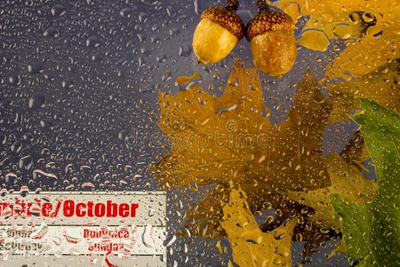 与干燥叶子的秋天多雨多云水天,滴在玻璃的,橡子和10月日历 免版税图库摄影