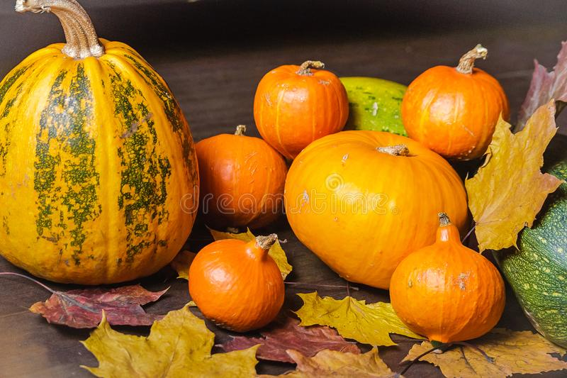 与干燥叶子的静物画秋天橙色南瓜 图库摄影