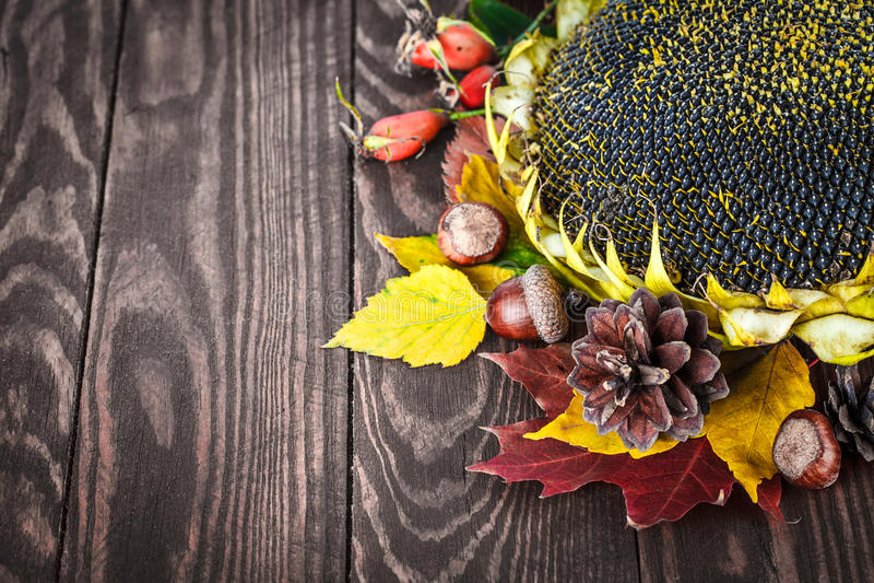 与干燥向日葵的pinecone的秋天静物画 库存图片