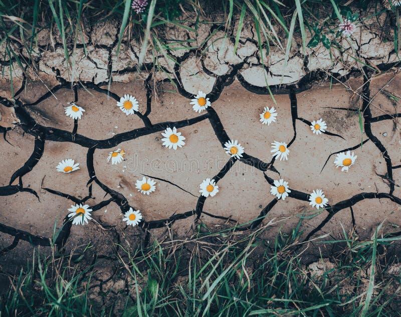 Download 与干燥高明的地面的背景与花和绿草 库存照片. 图片 包括有 背包, 增长, grunge, 宏指令, 地球 - 72352558