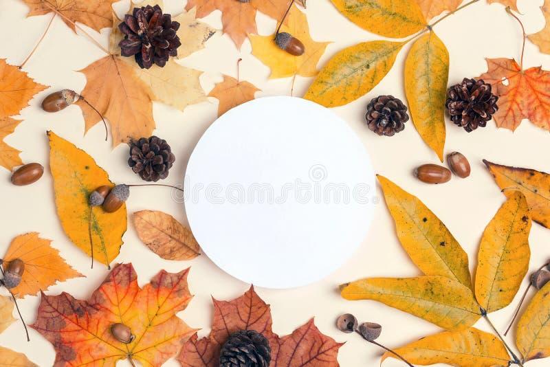与干秋叶、锥体和橡子的白色圆的框架  库存图片