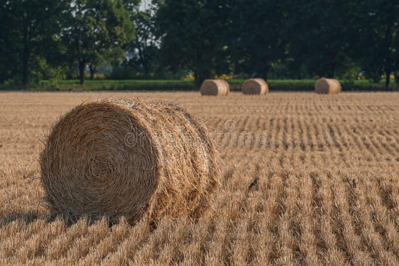 与干草堆的农业风景 免版税库存图片
