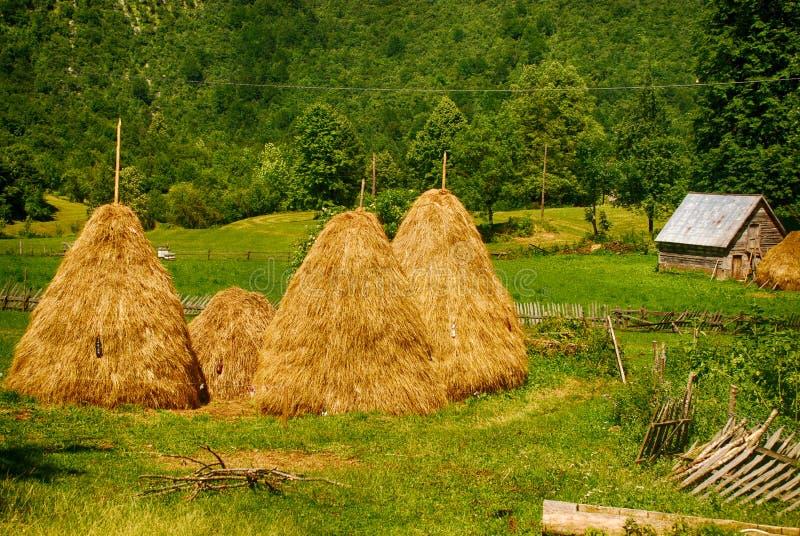 与干草堆的夏天农村风景 免版税图库摄影