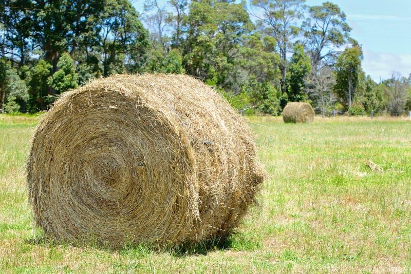 与干草堆的澳大利亚农村领域风景 免版税库存照片