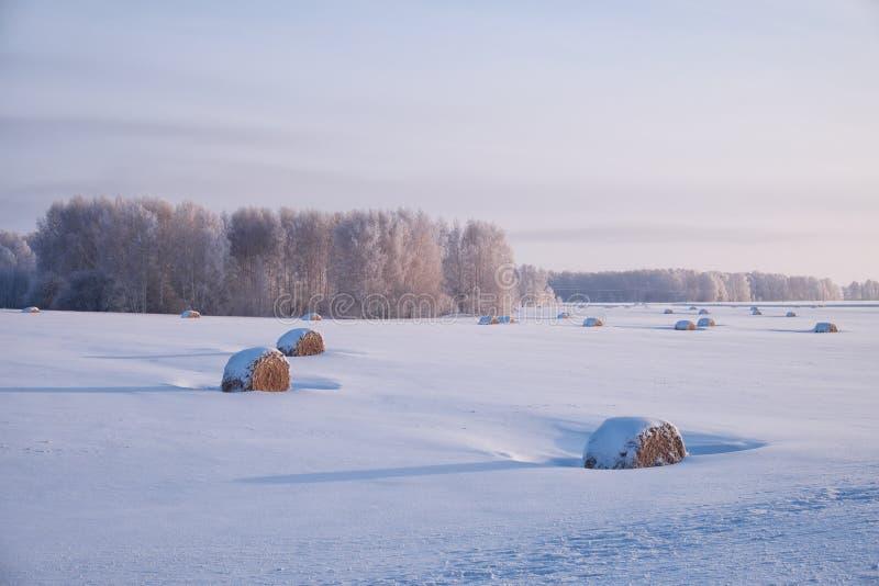 与干草的西伯利亚农村冬天风景在领域小海湾滚动 免版税库存照片