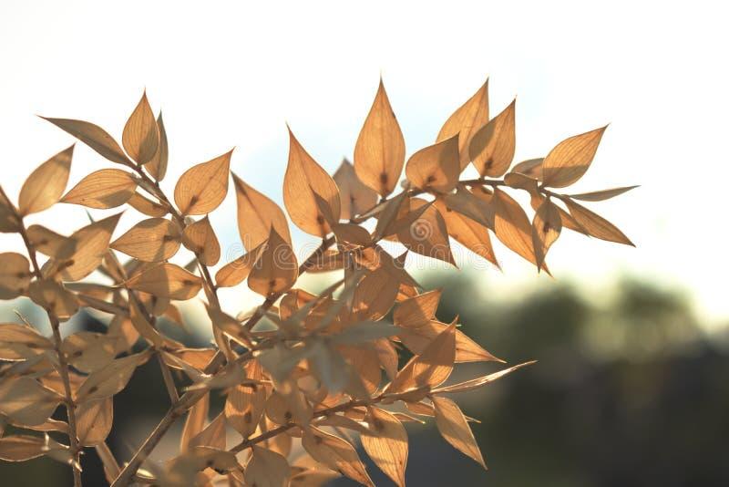 与干金黄叶子的分支 免版税库存照片