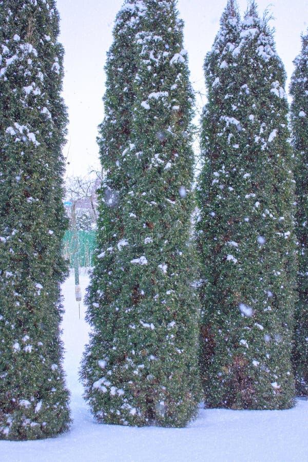 与平的县和森林,雪减速火箭的圣诞卡片的,冬天树风景背景的冷漠的风景风景 库存图片