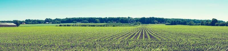 与庄稼的农业领域在行 库存图片
