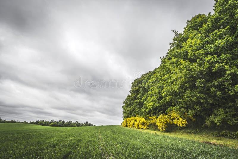 与庄稼的农业风景在领域 免版税库存照片