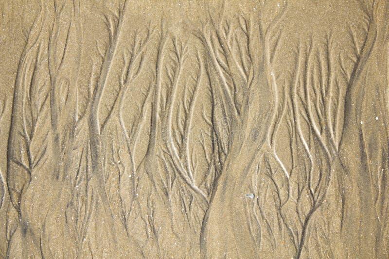 与床特写镜头小河的轻的沙子  自然表面纹理 免版税图库摄影