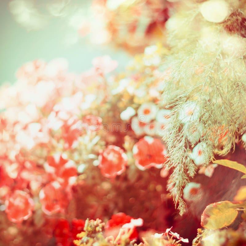 与庭院的美好的晚夏或秋天自然背景开花 免版税库存图片