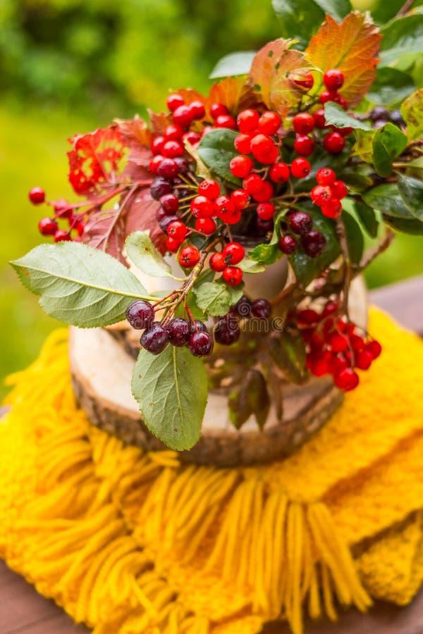 与庭院花和莓果花束的静物画  作为消沉有效草本金丝桃属植物医学perforatum对待 堂梨属灌木,干燥标本集,束山脉灰 库存照片