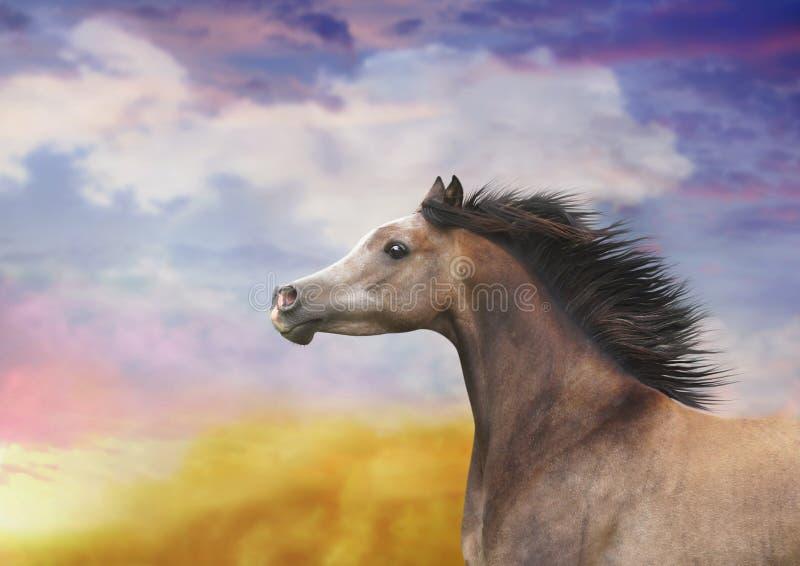 与开发的鬃毛的一匹马 图库摄影