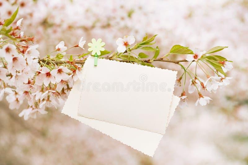 与开花樱桃花佐仓的葡萄酒照片后部 库存图片