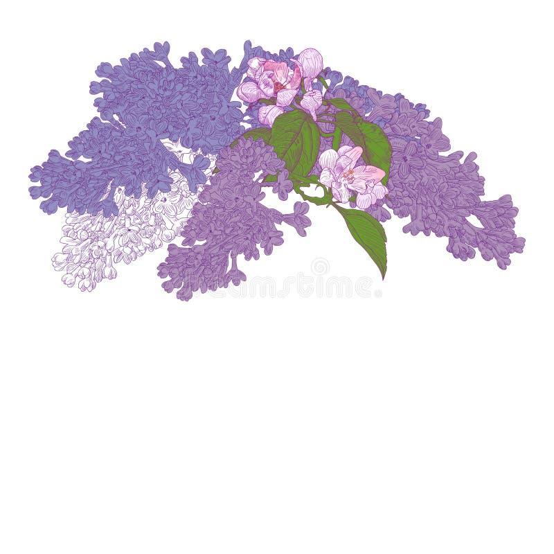与开花的丁香和苹果树的贺卡 向量例证
