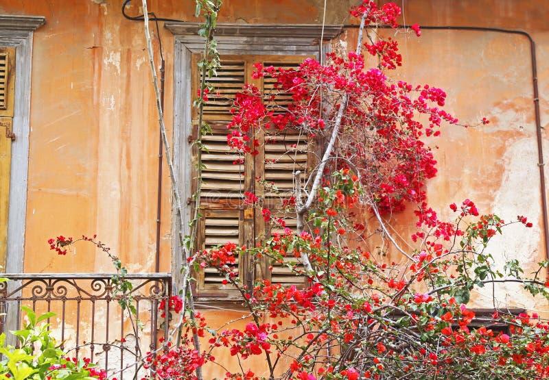 与开花的九重葛花纳夫普利翁希腊的传统老木窗口 免版税图库摄影
