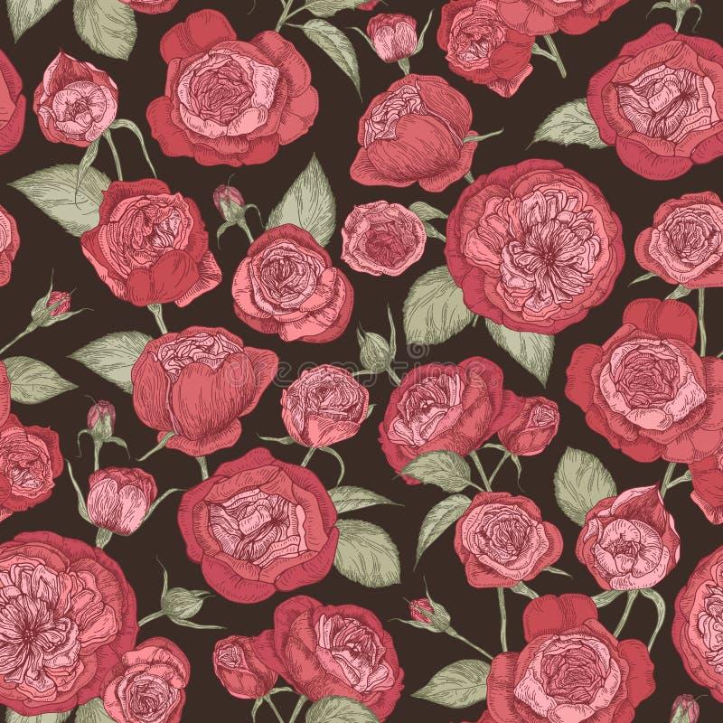 与开花的奥斯汀玫瑰的美好的浪漫无缝的样式在黑背景 与华美的庭院的背景 皇族释放例证