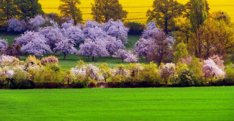 与开花的树和领域的春天场面 免版税库存照片