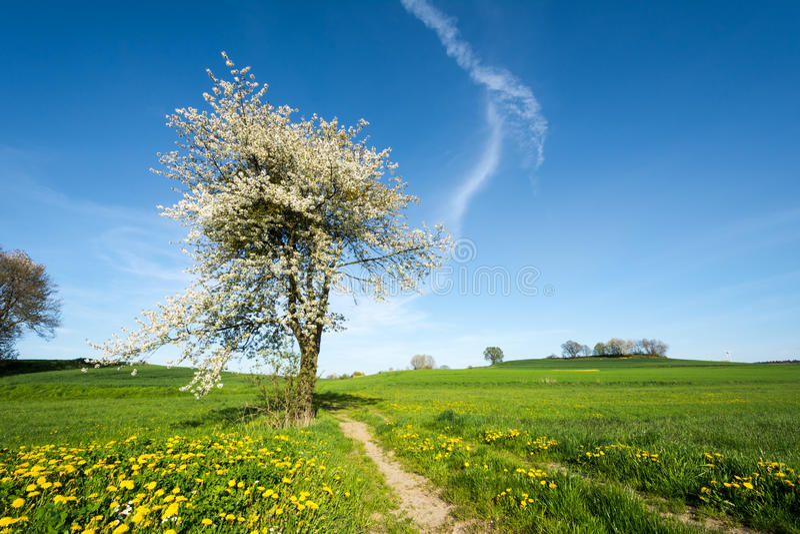 与开花的树的风景 免版税图库摄影
