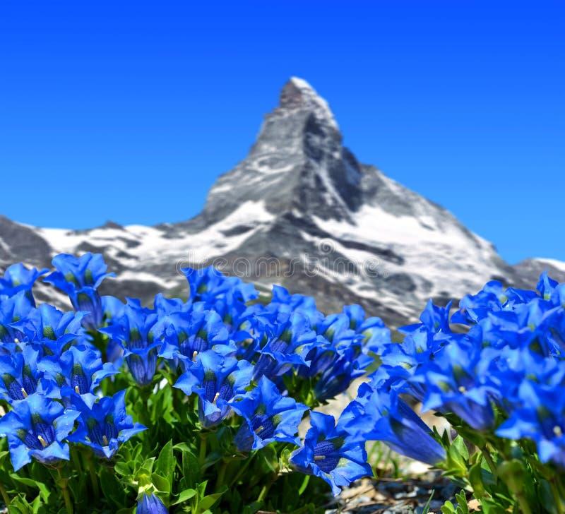 与开花的植物的美丽的山马塔角 库存照片